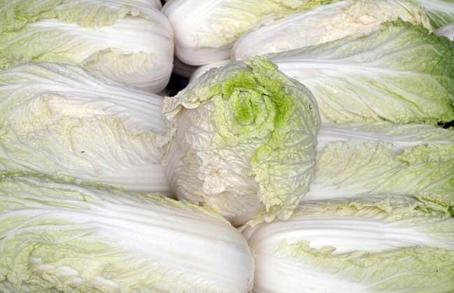 白菜种子品种及播种方法,价格走势?
