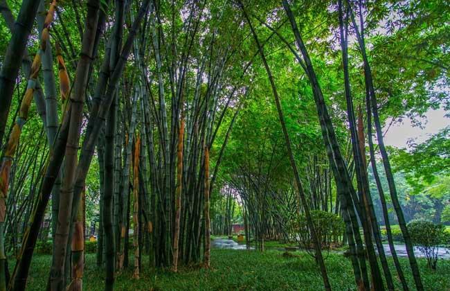 壁纸 风景 森林 桌面 650_420