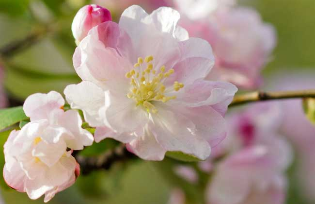 一树梨花压海棠是什么意思