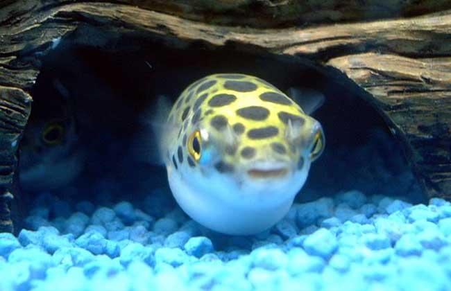 壁纸 动物 海底 海底世界 海洋馆 水族馆 鱼 鱼类 650_420