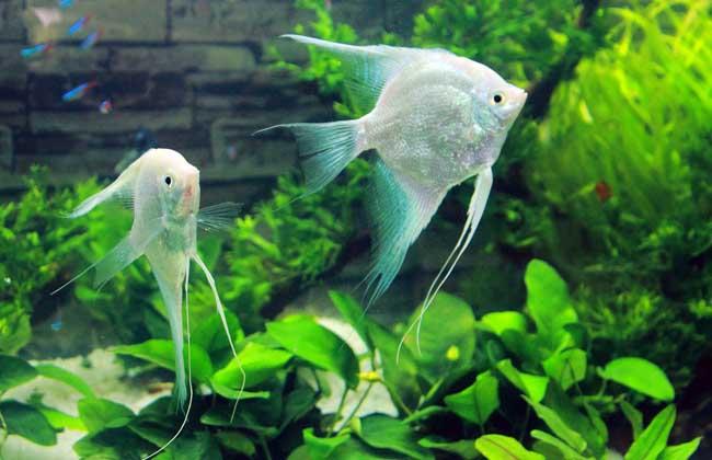 主要栖息于淡水流域及湖沼