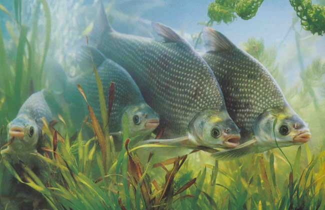 壁纸 动物 鱼 鱼类 650_420
