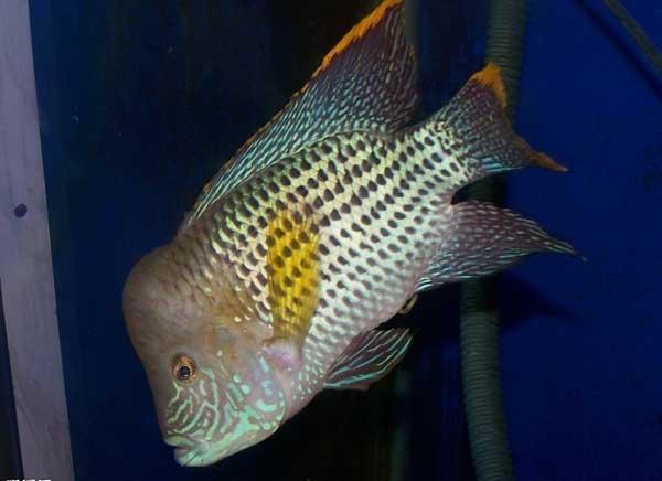 观赏鱼的种类有哪些养殖成本?