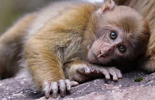 国家一级保护动物有哪些?