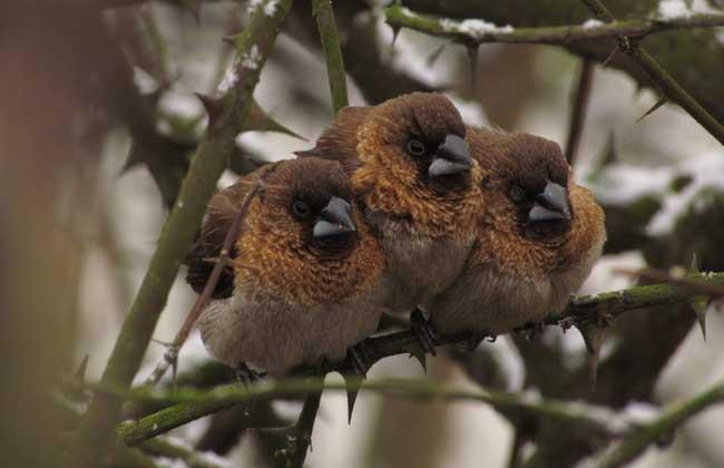麻雀是几级保护动物?