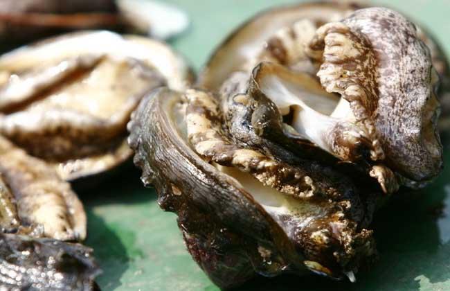 鲍鱼属于单壳软体动物,其只有半面外壳,壳坚厚,扁而宽,为中国传统的