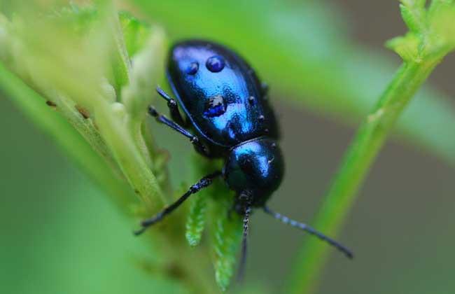 废弃物品手工制作甲虫