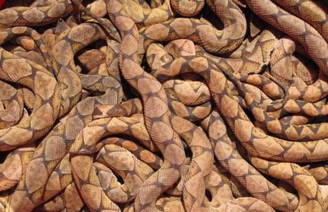 五步蛇是国家二级濒危保护动物,安徽(                  农用地