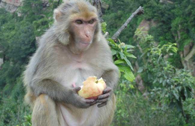 动物吃东西  gif