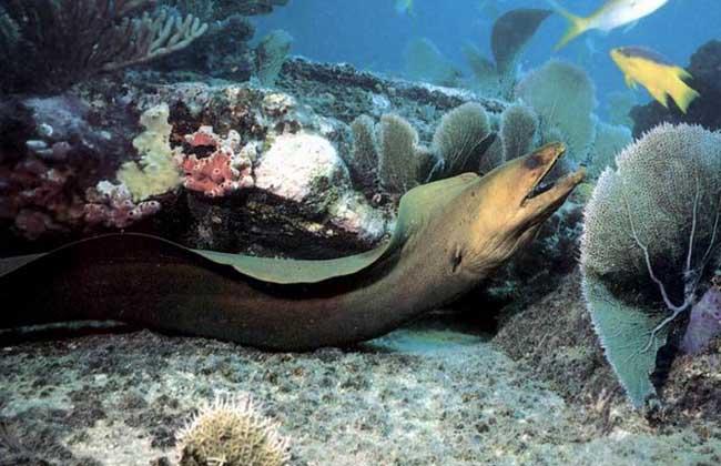 海鳗品种图片大全
