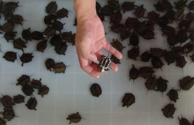 石金钱龟方法养殖腻子_绘制设计广联达地下室温室怎么种植图片