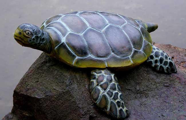 玉米乌龟手工制作图片