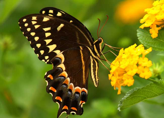 形态各异,是地球上数量最多的动物群体,人类已知的昆虫约有100万种最