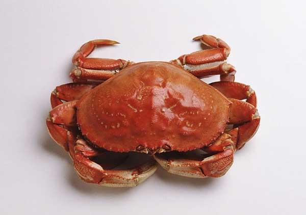 螃蟹不能和什么一起吃 1、柿子:螃蟹、柿子是秋天都可以吃到的两样东西,但这两样却不能一起吃。原因是:蟹肉中富含蛋白质,而柿子中含有大量的鞣酸,这两样物质会互相发生反应,形成蛋白质凝固成块状物,而我们的胃部很难消化这种产物。所以有人吃了螃蟹又吃柿子,就可以造成恶心、呕吐、腹痛、腹泻等不适。 2、浓茶:中国人喜欢喝茶,但吃螃蟹的时候,最佳的饮料是温黄酒,吃螃蟹前后最好不要饮茶。原因有两点:1、蟹脚、蟹腮中不免带有一点细菌,喝酒饮醋可以杀死它们,我们的胃液也有一定的杀菌能力,但喝了茶水之后,会将胃液冲淡,杀菌